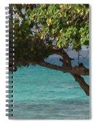 Tree Over Sapphire Beach Spiral Notebook