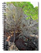 Tree Rock And Life Spiral Notebook