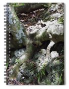 Tree Roots On The Bank Spiral Notebook