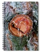 Tree Sap Spiral Notebook