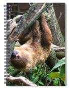 Tree Sloth Spiral Notebook