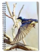 Tree Swallow In Flight Spiral Notebook