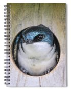 Tree Swallow In Nest Box Spiral Notebook