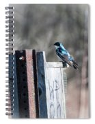 Tree Swallow Spiral Notebook