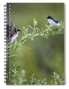 Tree Swallows Spiral Notebook