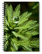 Tree Top Dew Drop Spiral Notebook
