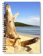 Tree Trunk On Beach Spiral Notebook