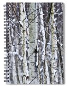 Tree Trunks Covered With Snow In Winter Spiral Notebook