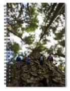 Tree Walkers Spiral Notebook
