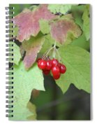 Tree With Red Berry Spiral Notebook