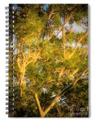 Tree With V Shaped Branches Spiral Notebook
