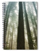 Treed Spiral Notebook