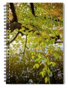 Trees 9684 Spiral Notebook