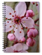 Trees Art Prints Canvas Pink Blossoms Spring Blue Sky Baslee Troutman Spiral Notebook