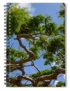 Trees In Bermuda Spiral Notebook