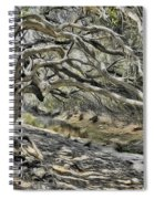 Trees Of Ziarat Spiral Notebook