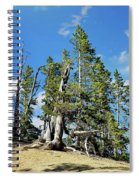 Trees On The Edge 1 Spiral Notebook