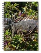 Treetop Iguana Spiral Notebook