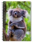 Treetop Koala Spiral Notebook