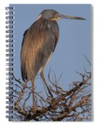 Tri Color Heron Spiral Notebook