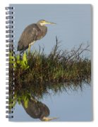 Tri-colored Heron And Reflection Spiral Notebook