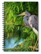 Tri-colored Heron At Sunset  Spiral Notebook