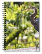 Tri-colored Heron Fledgling  Spiral Notebook