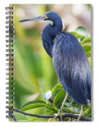 Tri-colored Heron On A Branch  Spiral Notebook