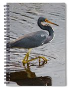 Tri-colored Heron Wading In The Marsh Spiral Notebook