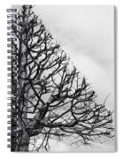Triangle Tree Spiral Notebook