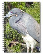 Tricolor Heron Profile Spiral Notebook