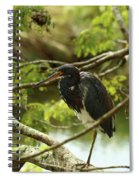 Tricolored At Rest  Spiral Notebook