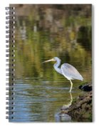 Tricolored Heron Fishing Spiral Notebook