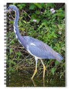 Tricolored Heron Hunting Spiral Notebook