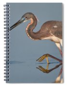 Tricolored Heron Stepping Spiral Notebook