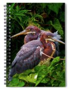 Tricolored Siblings Spiral Notebook