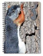 Tricolored Squirrel Spiral Notebook