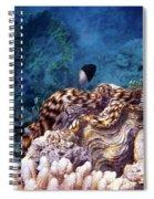 Tridacna Squamosa  Spiral Notebook