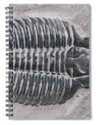 Trilobite Spiral Notebook