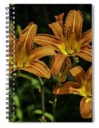 Trio Of Orange Tiger Lilies Spiral Notebook