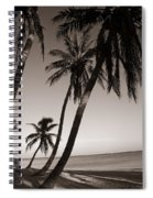 Triple Palms Spiral Notebook