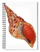 Triton Shell On White Vertical Spiral Notebook