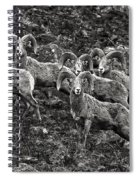 Trophy Rams Spiral Notebook
