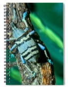 Tropical Blue Weevil Spiral Notebook