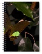 Tropical Buterfly Spiral Notebook