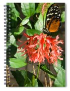 Tropical Butterfly On Flower Spiral Notebook