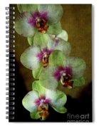 Tropical Dreams 2 Spiral Notebook