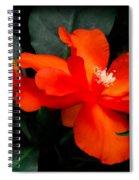 Tropical Elegance Spiral Notebook