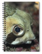 Tropical Fish Porcupinefish  Spiral Notebook