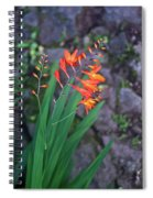 Tropical Orange Lily Spiral Notebook